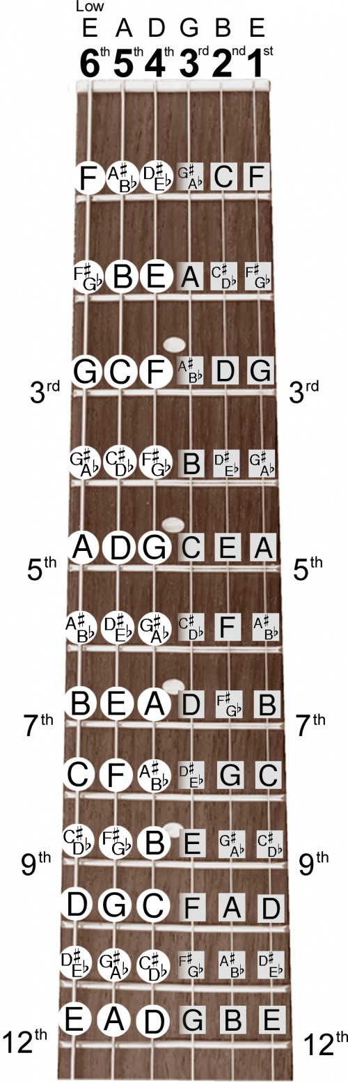 guitar neck notes chart guitar note chart e major chord b major chord 18159 | Fretboard